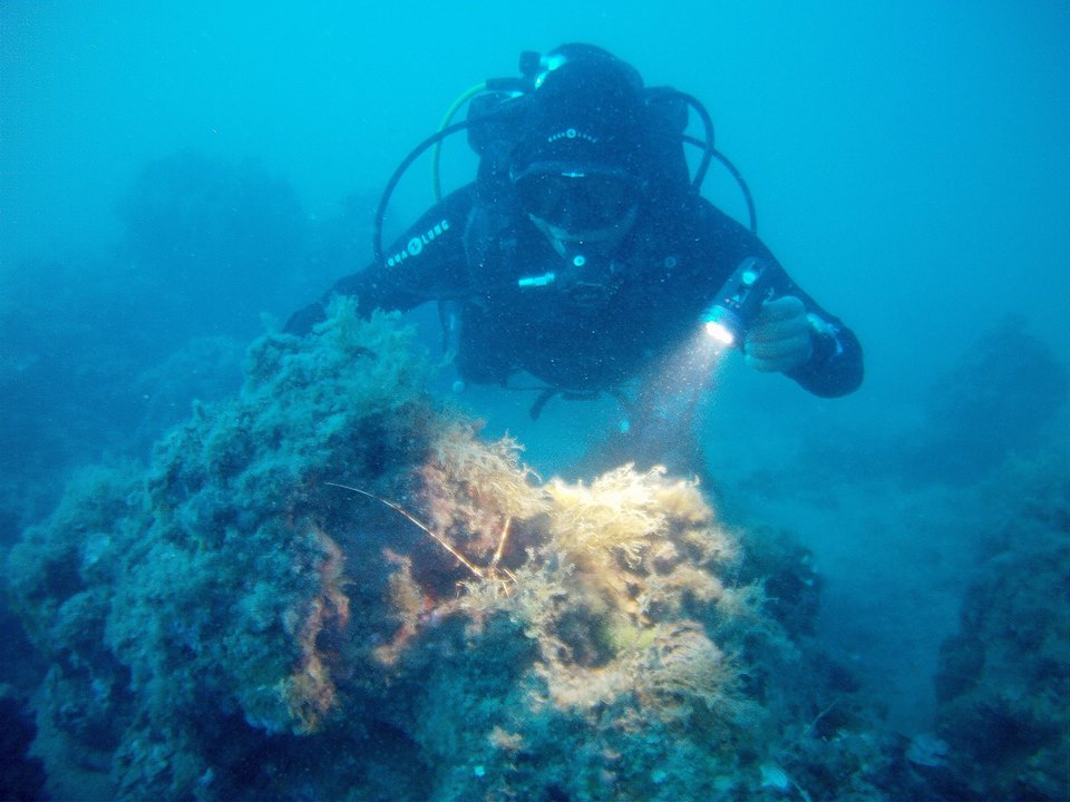 glups diving