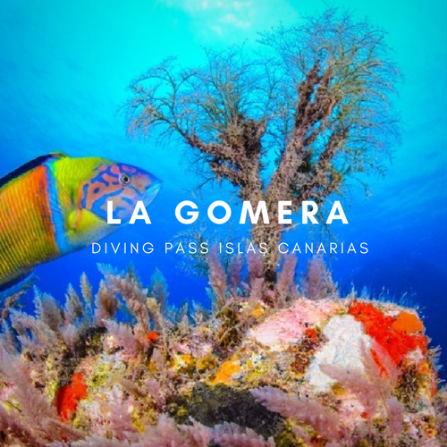 Diving pass la Gomera
