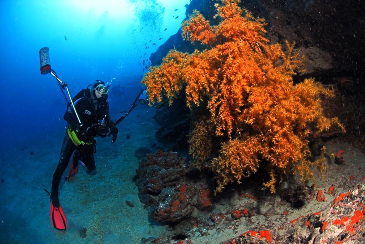 Deep Blue Diving Fuerteventura