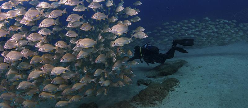 Atlantis Diving Center